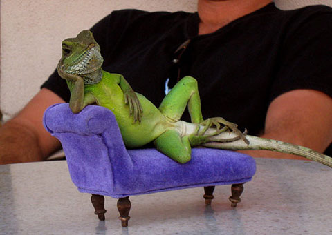 lizard-couch